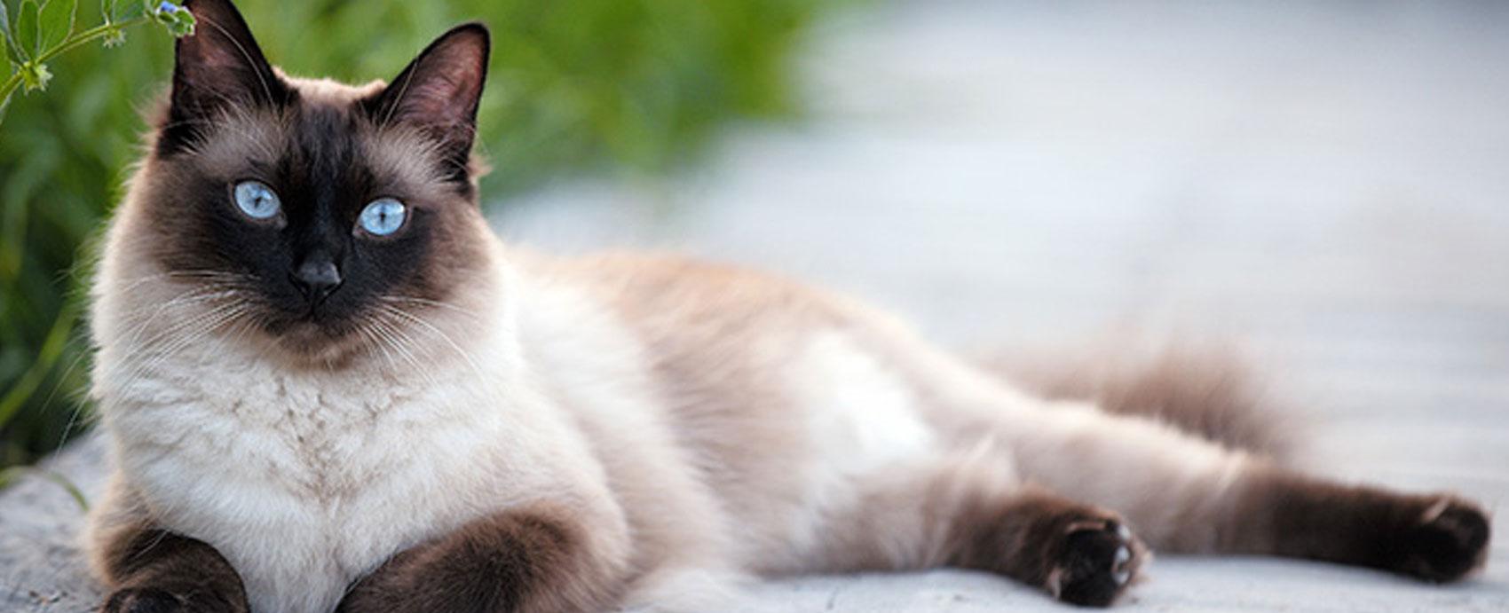 katzen bilder excellent wie nennt man weie katzen mit augen with katzen bilder great katzen. Black Bedroom Furniture Sets. Home Design Ideas